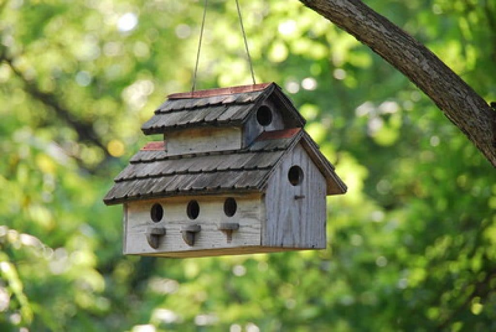 install the camera inside a bird house