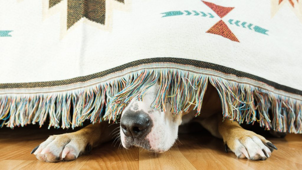 Calms your dog