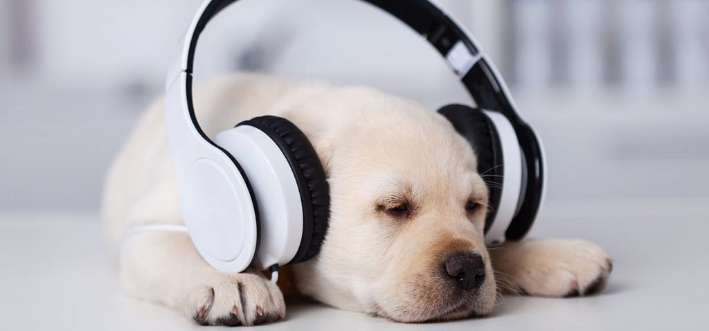 Is the ultrasonic sound good for dogs