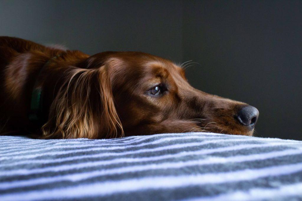 Super safe on dogs