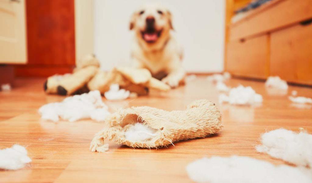 unacceptable behaviors of dog